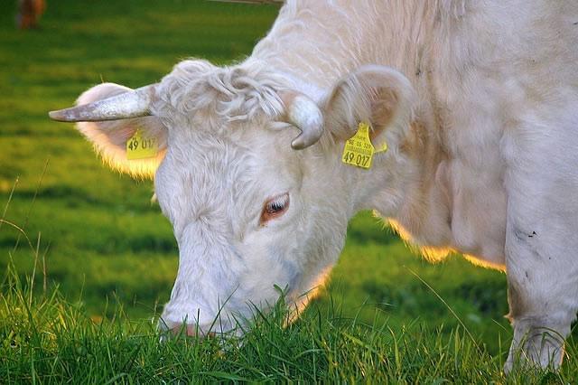 Bio-Fleisch von artgerecht gehaltenen Tieren
