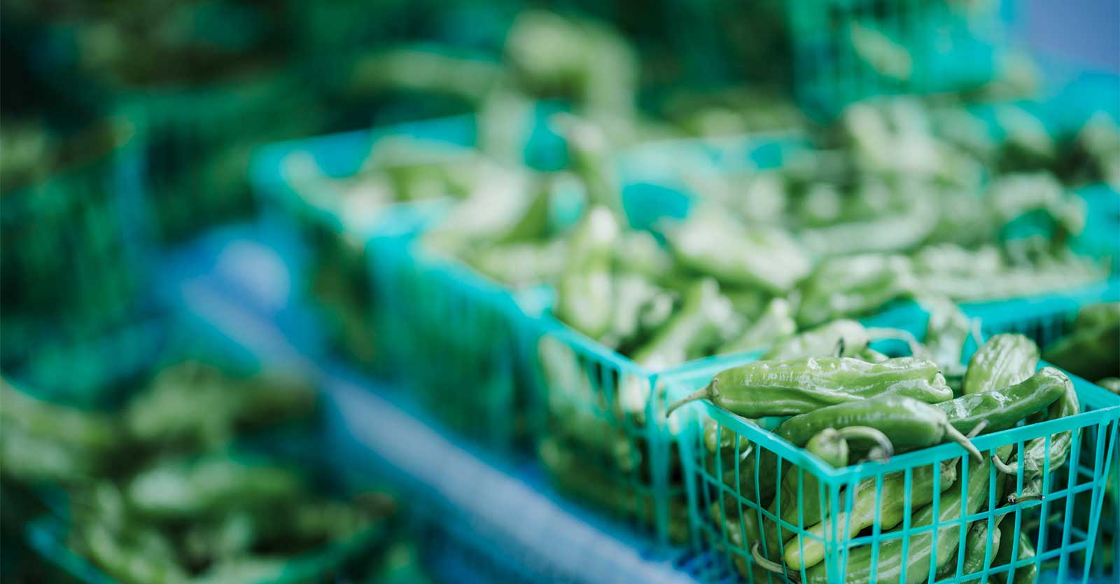 Bio-Produkte preiswert einkaufen